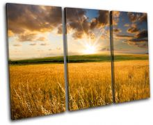 Field Sunrise Landscapes - 13-2213(00B)-TR32-LO